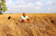 Nông nghiệp Việt: Cần lấy chất lượng và giá trị gia tăng làm cốt lõi