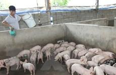 """""""Dẹp loạn kháng sinh"""" trong chăn nuôi hướng đến nền nông nghiệp sạch"""