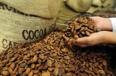 Indonesia chưa phản hồi vụ xuất khẩu nông sản nhiễm mọt sang Việt Nam