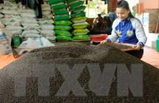 Thị trường hạt tiêu kém sôi động, giá giảm nhẹ trong tháng Một