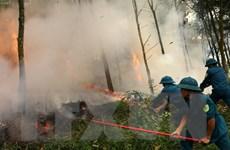 Cảnh báo nguy cơ cao xảy ra cháy rừng tại nhiều tỉnh đầu năm nay