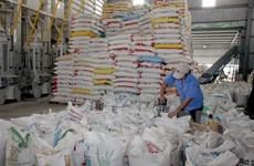 Thị trường lúa gạo tăng giá do doanh nghiệp mua xuất sang Philippines