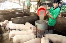 Ngừng nhập thức ăn chăn nuôi chứa kháng sinh kích thích sinh trưởng