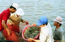 Đề nghị xuất 100 tấn hóa chất hỗ trợ Bạc Liêu phòng bệnh trên tôm