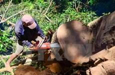 Yêu cầu các địa phương làm rõ nguyên nhân giảm diện tích rừng tự nhiên