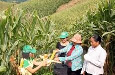 Cây trồng biến đổi gen giúp xóa đói giảm nghèo cho 16,5 triệu người