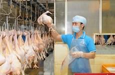 Việt Nam xuất khẩu lô thịt gà đầu tiên sang Nhật Bản vào tháng Tám