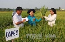 Quản lý giống cây trồng: Hành lang pháp lý vừa thiếu vừa lạc hậu