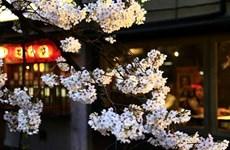 """Tìm hiểu văn hóa Nhật Bản qua """"một chiếc khăn tay"""""""