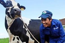 """Hoa hậu bò sữa Mộc Châu 2014: Cuộc đua của 135 """"cô bò"""""""