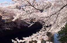 Chu du Tokyo-Núi Phú Sĩ-Nikko-Fukushim 5 ngày chỉ 28,99 triệu đồng