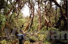 Lạc vào khu rừng cổ tích đầy ma quái và lãng mạn trên đỉnh Pu Ta Leng