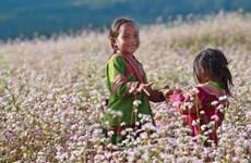 'Lạc trôi' giữa mùa hoa từ vùng cao Tây Bắc đến miền Tây nước nổi