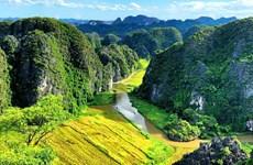 Khám phá những địa điểm ngắm 'Mùa vàng Tam Cốc' đẹp nhất