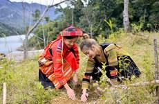 Top 10 Hoa khôi Du Lịch Việt Nam 2020 phủ xanh đất trống ở Tuyên Quang