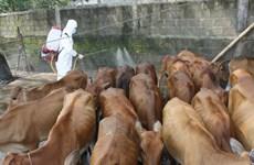 Hà Tĩnh công bố dịch lở mồm long móng trên gia súc