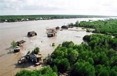 Xử lý nghiêm vụ phá rừng ở Vườn quốc gia Mũi Cà Mau