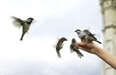 Kiên Giang thả 5.000 con chim bị bắt đem bán