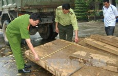 Thu giữ 1 tấn gỗ quý vận chuyển trái phép trên xe khách