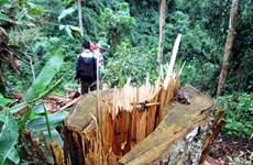 Lâm tặc lại hoành hành ở Khu bảo tồn thiên nhiên Kim Hỷ