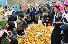 Người Mông ở rẻo cao Yên Bái phấn khởi đón Xuân về
