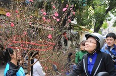 Phú Thọ: Vùng căn cứ địa cách mạng tràn ngập sắc Xuân