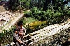 Bàn các giải pháp phát triển rừng trồng keo bền vững