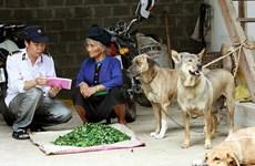 Hơn 20 người bị chó nghi dại cắn trong một tháng ở Lào Cai