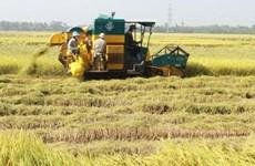 Hỗ trợ giống chuyển đổi từ trồng lúa sang trồng cây màu