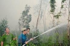 Bình Định: Cháy rừng dữ dội xuất phát từ việc đốt vàng mã