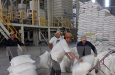 Hỗ trợ hơn 300 tấn gạo cho tỉnh Tuyên Quang để cứu đói