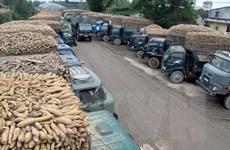Nghề chế biến bột sắn gây ô nhiễm môi trường nghiêm trọng