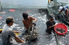 """""""Cà Mau cần tiếp tục phát huy thế mạnh nuôi trồng thủy sản"""""""