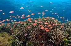 Giải pháp xây dựng thương hiệu đa dạng sinh học biển Việt Nam