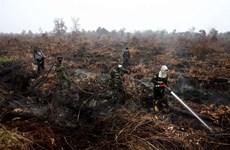 Cháy rừng nghiêm trọng, Indonesia huy động 25 máy bay dập lửa