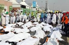 Kiểm tra ADN xác định danh tính nạn nhân vụ giẫm đạp ở Mecca