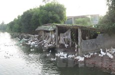 Nam Định chính thức công bố hết dịch cúm gia cầm H5N6