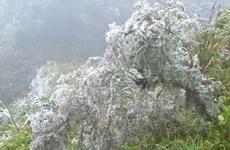 Tour khám phá núi rừng mờ sương hút khách dịp Tết Dương lịch