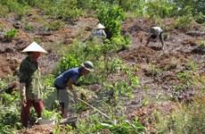 Hướng giải quyết vấn đề đất đai nhức nhối tại các nông, lâm trường
