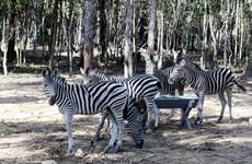 Vinpearl Safari bác bỏ thông tin hàng nghìn cá thể động vật bị chết