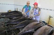 Phú Yên: Nghề đánh cá ngừ đại dương lãi cao nhờ giá dầu giảm