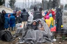 """Vấn đề di cư: Croatia và Slovenia """"đặt dấu chấm hết"""" cho tuyến Balkan"""