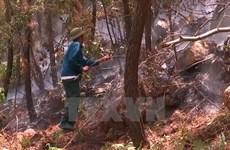 Yên Bái: Mâu thuẫn với trưởng thôn, châm lửa đốt rừng thông