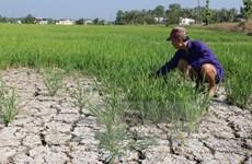 Ứng phó tại tâm điểm hạn mặn khu vực Đồng bằng sông Cửu Long