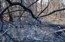 50ha rừng bị thiêu rụi trong vụ cháy rừng ở Mù Cang Chải