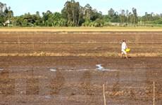 Hạn mặn nghiêm trọng ở Đồng bằng sông Cửu Long: Người khát, cá chết