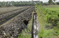 Thời tiết khô hạn, nông dân Cà Mau trúng lớn mùa đậu xanh