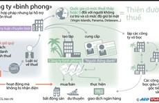 [Infographics] Tìm hiểu về công ty bình phong hỗ trợ việc trốn thuế