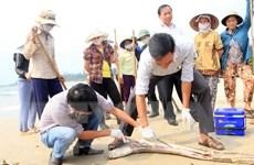 Vụ nhập viện sau khi ăn cá nục ở Nghệ An: Do dị ứng thức ăn