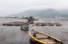 Ngư dân, tiểu thương Đà Nẵng khốn khổ vì không bán được cá